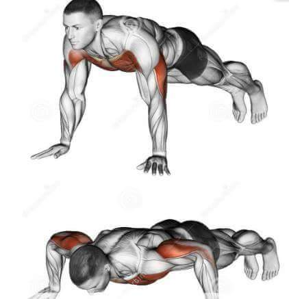 Pushups chest exercise